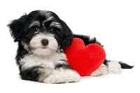 cute puppy with heart
